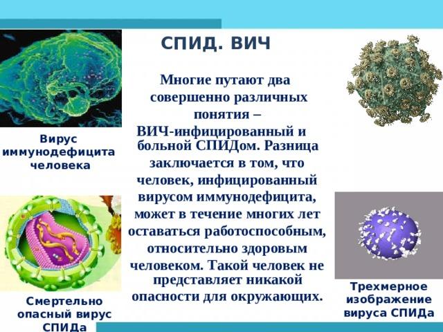 СПИД. ВИЧ    Многие путают два  совершенно различных  понятия – ВИЧ-инфицированный и больной СПИДом. Разница  заключается в том, что  человек, инфицированный  вирусом иммунодефицита,  может в течение многих лет  оставаться работоспособным,  относительно здоровым  человеком. Такой человек не представляет никакой  опасности для окружающих.  Вирус иммунодефицита  человека Трехмерное изображение вируса СПИДа Смертельно опасный вирус СПИДа