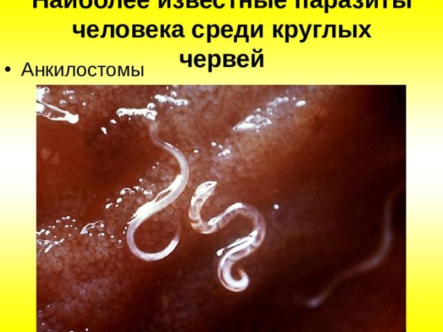Наиболее известные паразиты человека среди круглых червей Анкилостомы