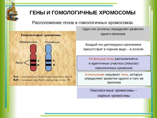 Кредит 24 рус