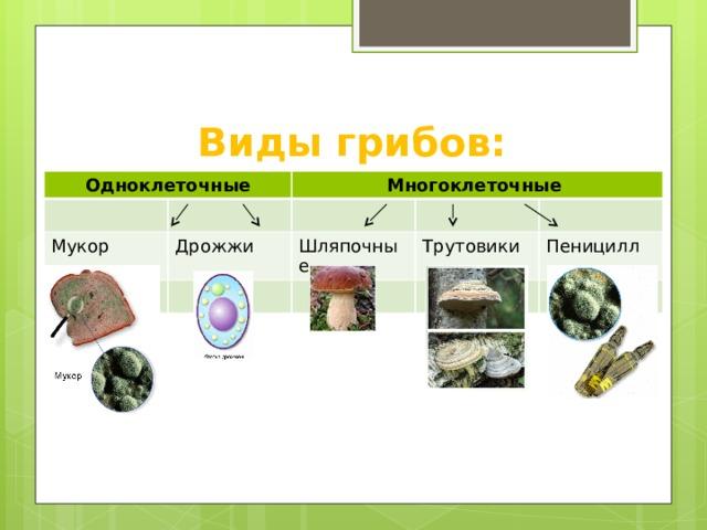 Виды грибов: Одноклеточные Мукор Многоклеточные Дрожжи Шляпочные Трутовики Пеницилл