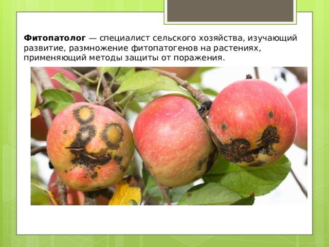 Фитопатолог — специалист сельского хозяйства, изучающий развитие, размножение фитопатогенов на растениях, применяющий методы защиты от поражения.
