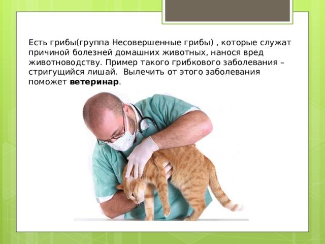 Есть грибы(группа Несовершенные грибы) , которые служат причиной болезней домашних животных, нанося вред животноводству. Пример такого грибкового заболевания – стригущийся лишай. Вылечить от этого заболевания поможет ветеринар .