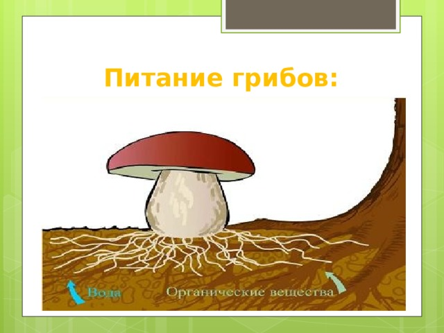 Питание грибов:
