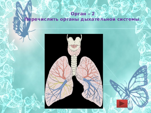 Орган – 2  Перечислить органы дыхательной системы.