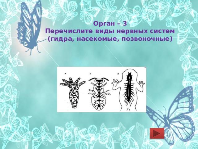 Орган – 3  Перечислите виды нервных систем (гидра, насекомые, позвоночные)
