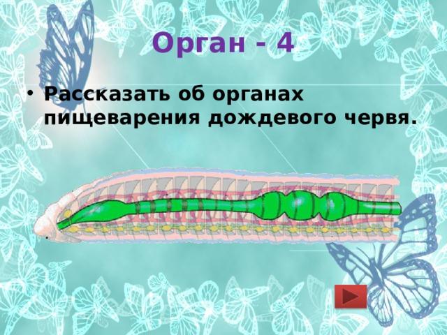 Орган - 4 Рассказать об органах пищеварения дождевого червя.