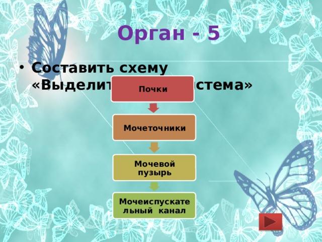 Орган - 5 Составить схему «Выделительная система» Почки Мочеточники Мочевой пузырь Мочеиспускательный канал