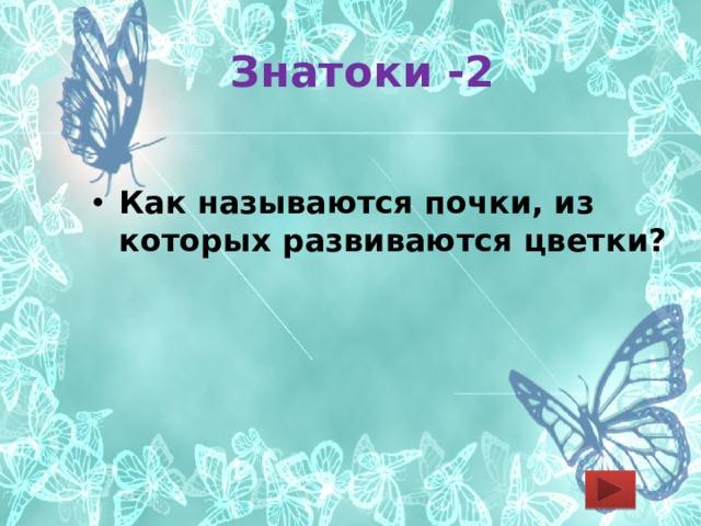 Знатоки -2 Как называются почки, из которых развиваются цветки?