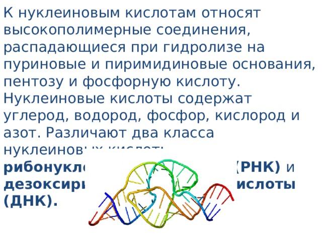 К нуклеиновым кислотам относят высокополимерные соединения, распадающиеся при гидролизе на пуриновые и пиримидиновые основания, пентозу и фосфорную кислоту. Нуклеиновые кислоты содержат углерод, водород, фосфор, кислород и азот. Различают два класса нуклеиновых кислот: рибонуклеиновые кислоты (РНК) и дезоксирибонуклеиновые кислоты (ДНК).
