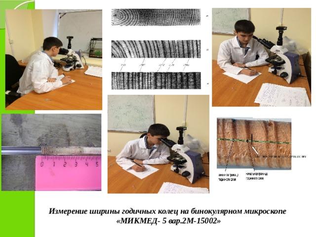 Измерение ширины годичных колец на бинокулярном микроскопе  «МИКМЕД- 5 вар.2М-15002»