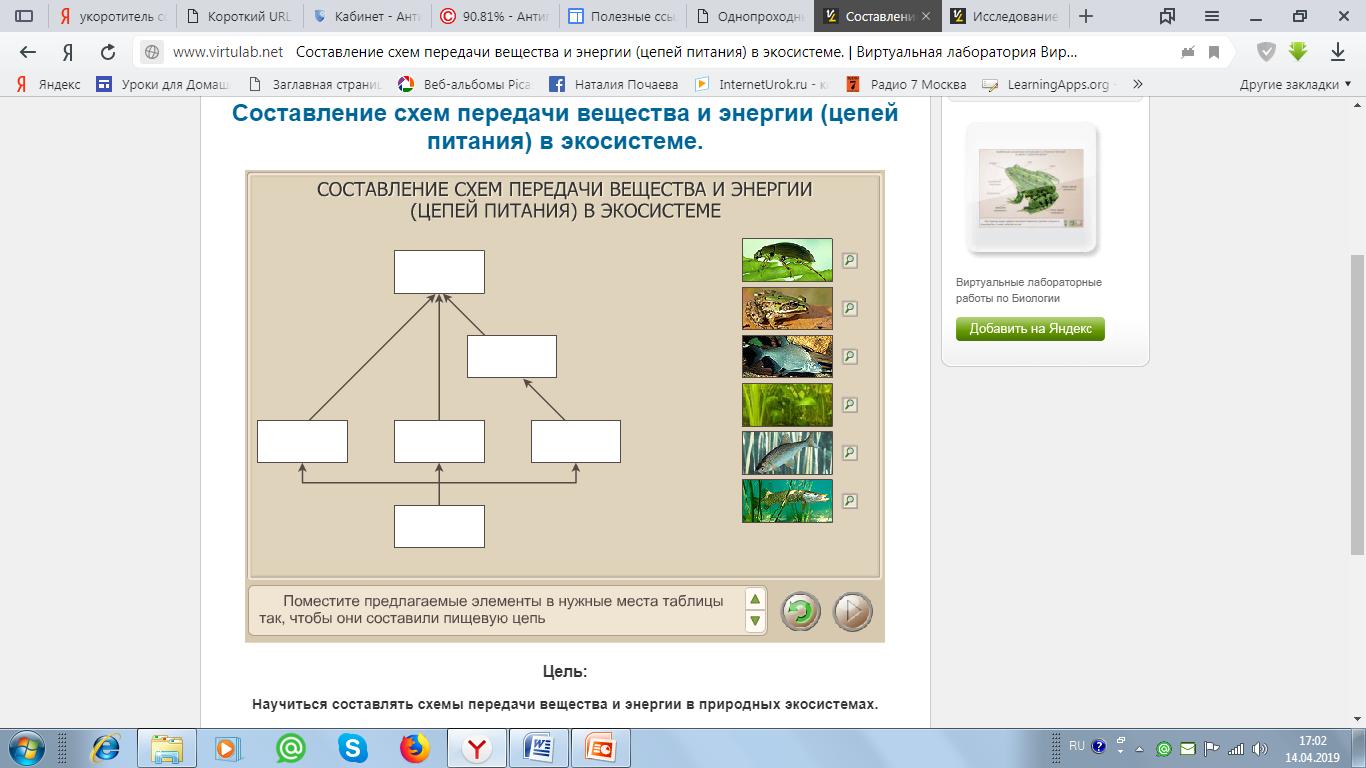 аквариум как девушка модель экосистемы лабораторная работа