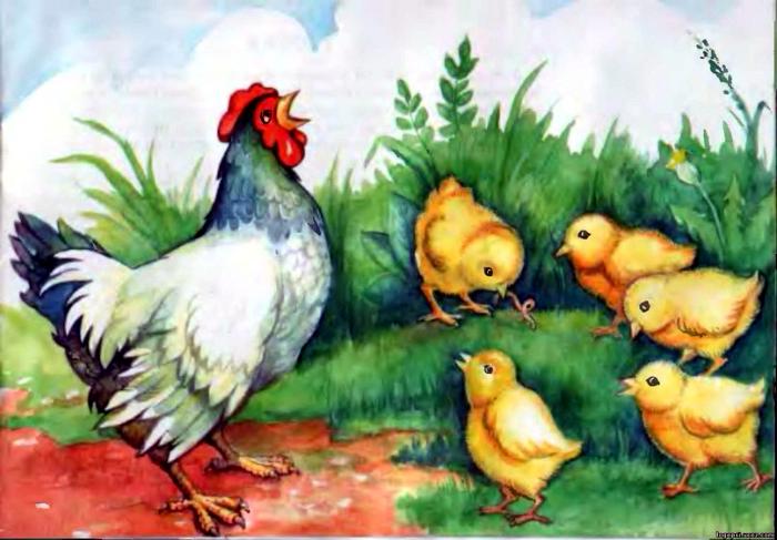 приёмник картинки с цыплятами для малышей желудка это