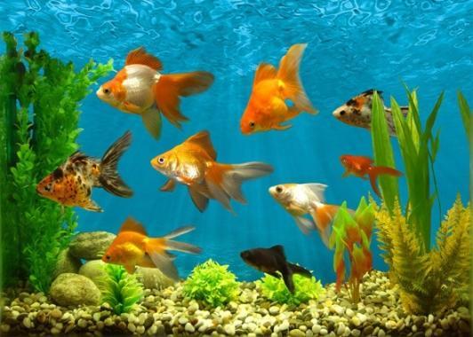 Практическая работа 2 аквариум как девушка модель экосистемы 11 веб камера вебкам эротика модели