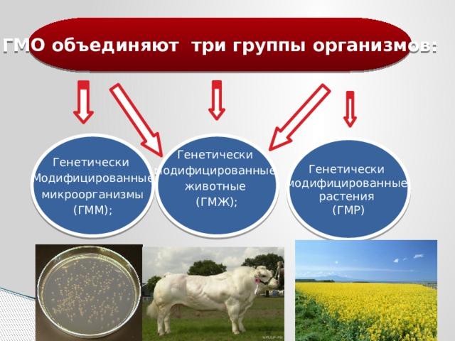 ГМО объединяют три группы организмов: Генетически Генетически модифицированные Модифицированные животные  микроорганизмы (ГМЖ); (ГММ); Генетически модифицированные растения (ГМР)