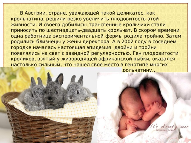 В Австрии, стране, уважающей такой деликатес, как крольчатина, решили резко увеличить плодовитость этой живности. И своего добились: трансгенные крольчихи стали приносить по шестнадцать-двадцать крольчат. В скором времени одна работница экспериментальной фермы родила тройню. Затем родились близнецы у жены директора. А в 2002 году в соседнем городке началась настоящая эпидемия: двойни и тройни появлялись на свет с завидной регулярностью. Ген плодовитости кроликов, взятый у живородящей африканской рыбки, оказался настолько сильным, что нашел свое место в генотипе многих женщин, регулярно покупавших дешевую крольчатину…