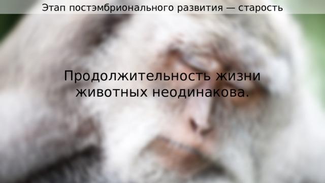 Этап постэмбрионального развития — старость Продолжительность жизни животных неодинакова.