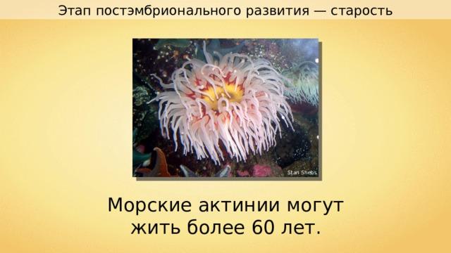 Этап постэмбрионального развития — старость Stan Shebs Морские актинии могут жить более 60 лет.