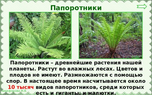 семенами размножается мох папоротник сосна