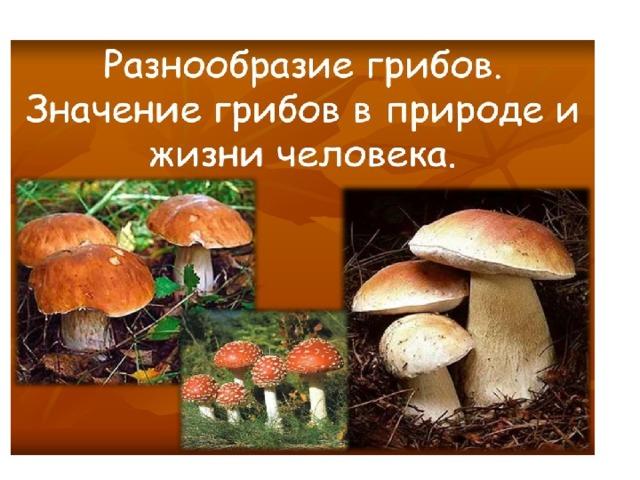 Классификация грибов.