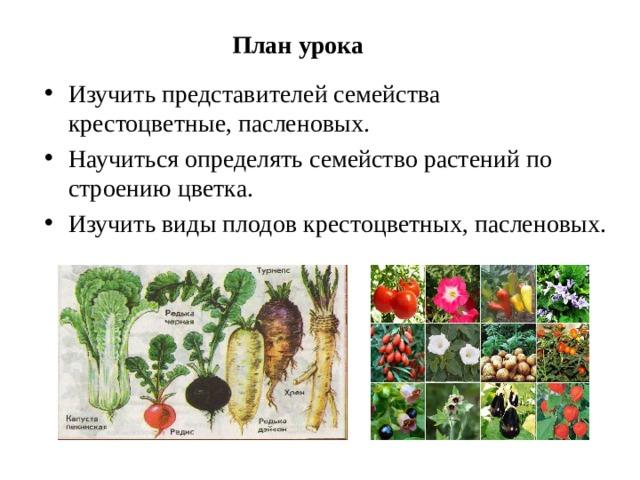 План урока Изучить представителей семейства крестоцветные, пасленовых. Научиться определять семейство растений по строению цветка. Изучить виды плодов крестоцветных, пасленовых.