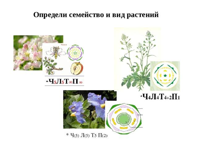 Определи семейство и вид растений