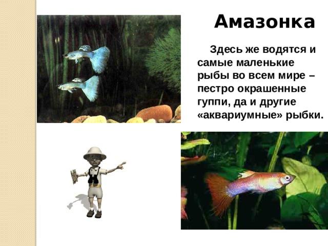 Амазонка В Амазонке водится рыба пираруку или, как ее еще называют, гигантская красная рыба. Отдельные ее экземпляры имеют длину около 5 м и весят до 200 кг! Тяжелое и массивное тело этих рыб у головы окрашено в зеленоватый, а ближе к хвосту в ярко-красный цвет. Охотятся на нее со стрелами и острогами.