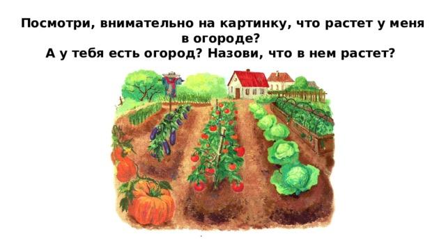 Посмотри, внимательно на картинку, что растет у меня в огороде?  А у тебя есть огород? Назови, что в нем растет?
