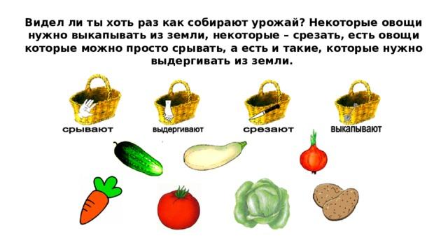 Видел ли ты хоть раз как собирают урожай? Некоторые овощи нужно выкапывать из земли, некоторые – срезать, есть овощи которые можно просто срывать, а есть и такие, которые нужно выдергивать из земли.