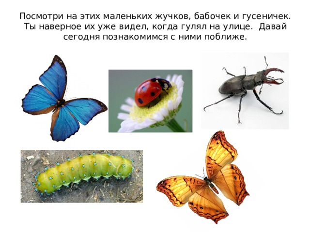 Посмотри на этих маленьких жучков, бабочек и гусеничек. Ты наверное их уже  видел, когда гулял на улице. Давай сегодня познакомимся с ними поближе.