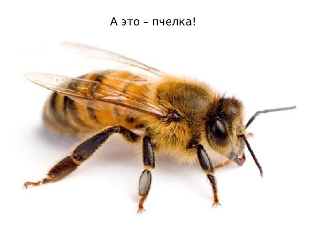А это – пчелка !