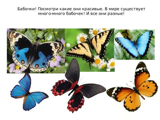 Бабочки! Посмотри какие они красивые. В мире существует много-много бабочек! И все они разные!