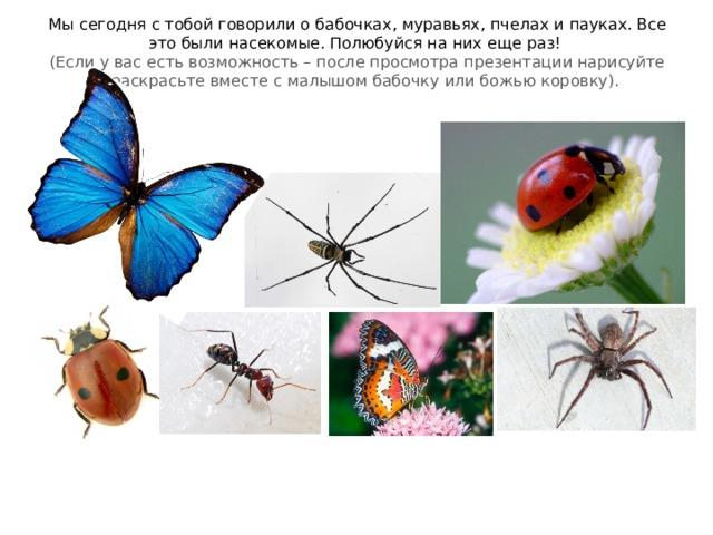 Мы сегодня с тобой говорили о бабочках, муравьях, пчелах и пауках. Все это были насекомые. Полюбуйся на них еще раз!  (Если у вас есть возможность – после просмотра презентации нарисуйте и раскрасьте вместе с малышом бабочку или божью коровку).