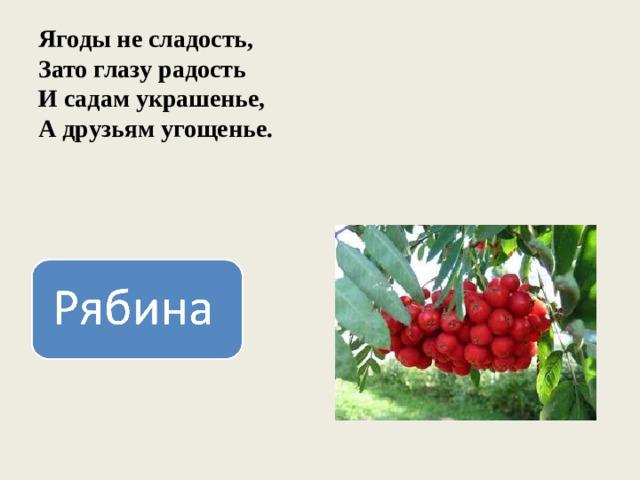 Ягоды не сладость,  Зато глазу радость  И садам украшенье,  А друзьям угощенье.