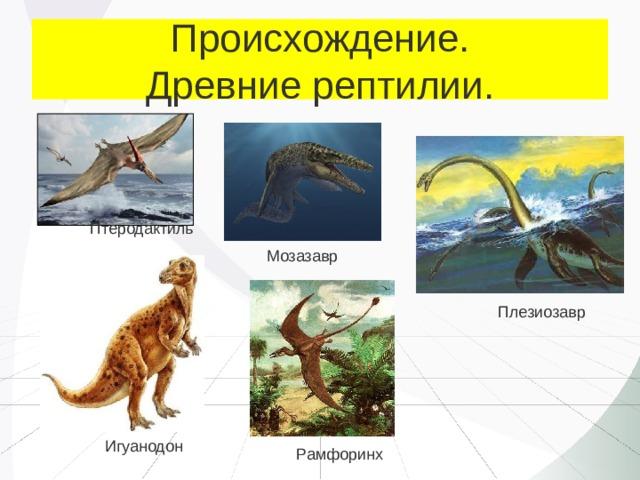 Происхождение.  Древние рептилии. Птеродактиль Мозазавр Плезиозавр Игуанодон Рамфоринх