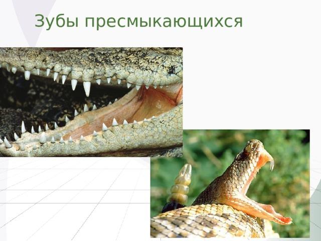 Зубы пресмыкающихся