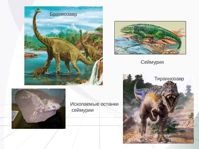 Брахиозавр Сеймурия Тираннозавр Ископаемые останки  сеймурии