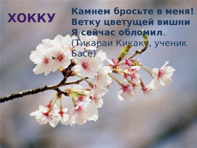 Камнем бросьте в меня!  Ветку цветущей вишни  Я сейчас обломил . (Тикараи Кикаку, ученик Басе) Хокку