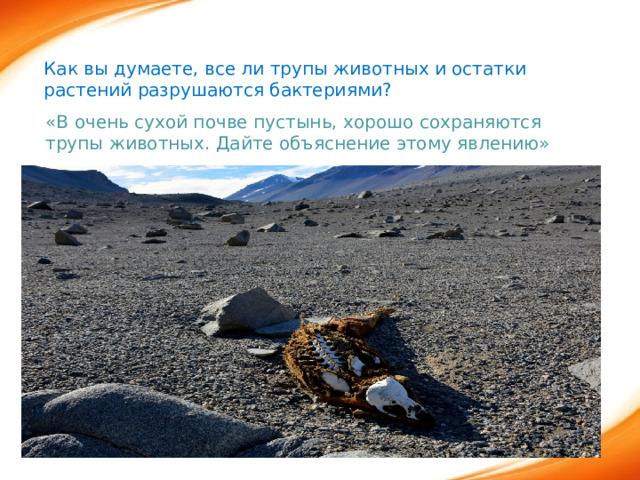 Как вы думаете, все ли трупы животных и остатки растений разрушаются бактериями? «В очень сухой почве пустынь, хорошо сохраняются трупы животных. Дайте объяснение этому явлению»