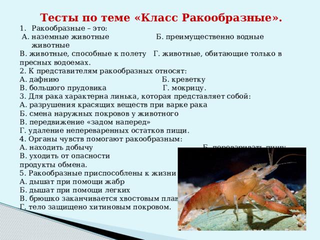 Тесты по теме «Класс Ракообразные». Ракообразные – это:  А. наземные животные Б. преимущественно водные животные В. животные, способные к полету Г. животные, обитающие только в пресных водоемах. 2. К представителям ракообразных относят: А. дафнию Б. креветку В. большого прудовика Г. мокрицу. 3. Для рака характерна линька, которая представляет собой: А. разрушения красящих веществ при варке рака Б. смена наружных покровов у животного В. передвижение «задом наперед» Г. удаление непереваренных остатков пищи. 4. Органы чувств помогают ракообразным: А. находить добычу Б. переваривать пищу В. уходить от опасности Г. удалять вредные продукты обмена. 5. Ракообразные приспособлены к жизни в воде: А. дышат при помощи жабр Б. дышат при помощи легких В. брюшко заканчивается хвостовым плавником Г. тело защищено хитиновым покровом.