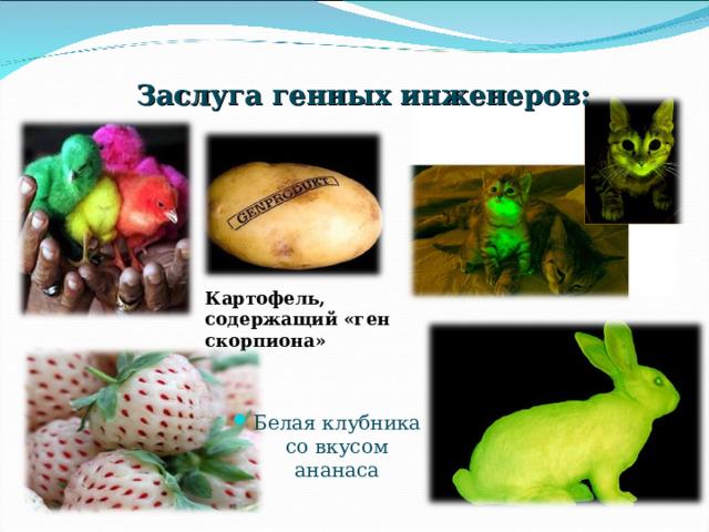 Заслуга генных инженеров: Картофель, содержащий «ген скорпиона»