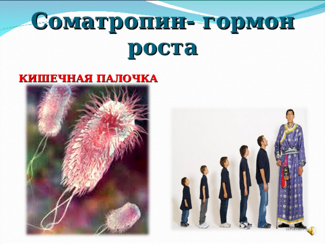 Соматропин- гормон роста КИШЕЧНАЯ ПАЛОЧКА