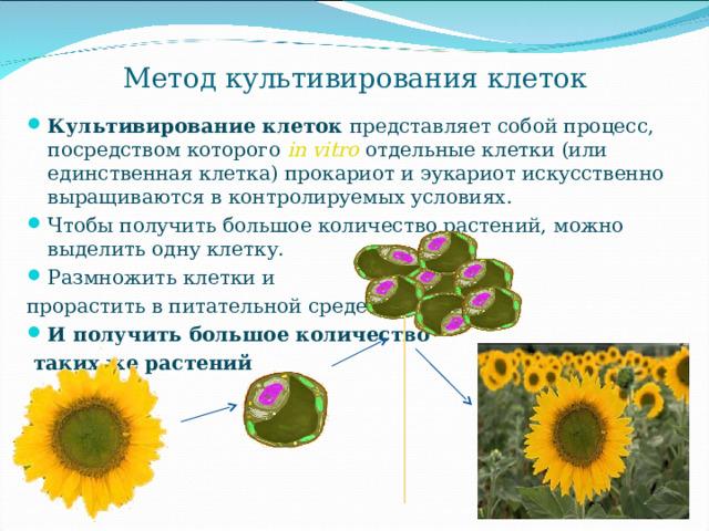 Метод культивирования клеток Культивирование клеток представляет собой процесс, посредством которого in vitro отдельные клетки (или единственная клетка) прокариот и эукариот искусственно выращиваются в контролируемых условиях. Чтобы получить большое количество растений, можно выделить одну клетку. Размножить клетки и прорастить в питательной среде И получить большое количество  таких же растений
