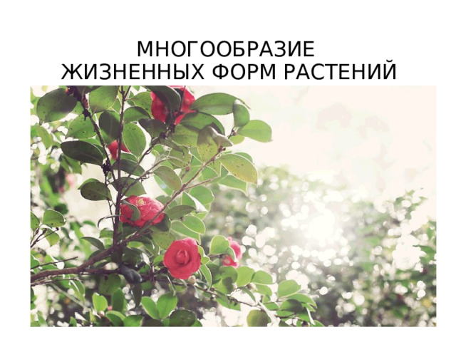 МНОГООБРАЗИЕ  ЖИЗНЕННЫХ ФОРМ РАСТЕНИЙ