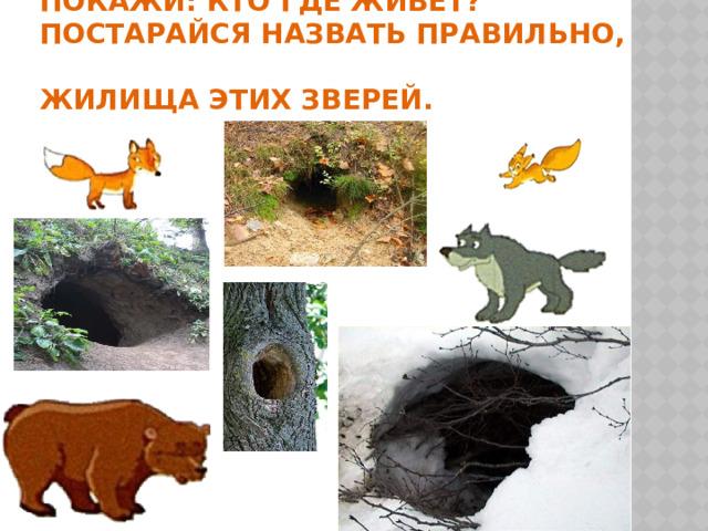 Покажи: кто где живёт?  Постарайся назвать правильно,  жилища этих зверей.