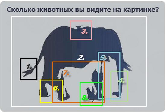 день сколько животных вы видите на картинке правильно назначенный