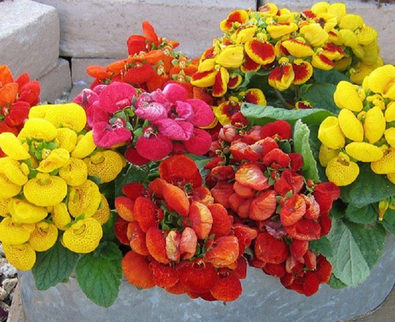 домашние цветы из семян фото и названия средние века