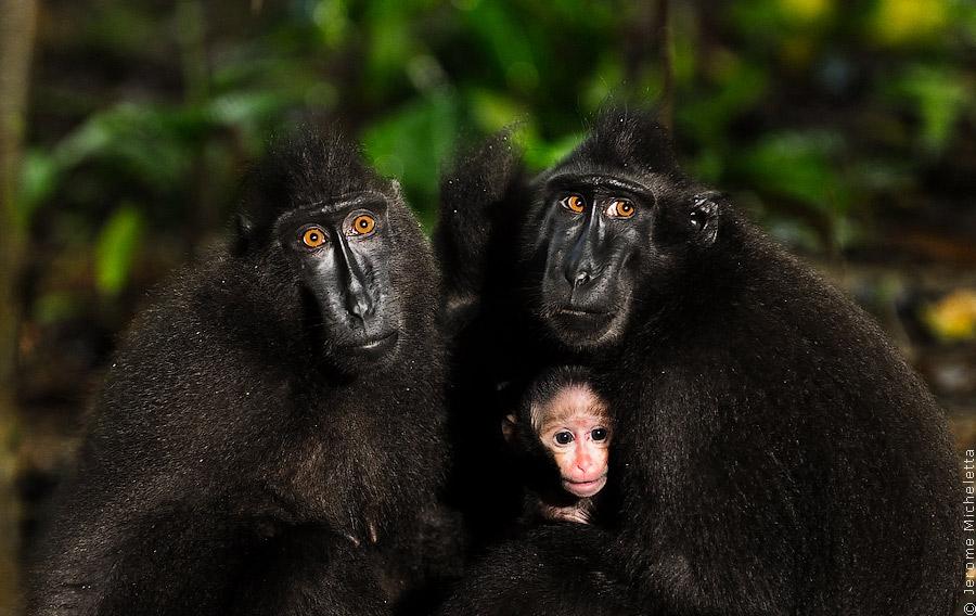 Животные индонезии фото