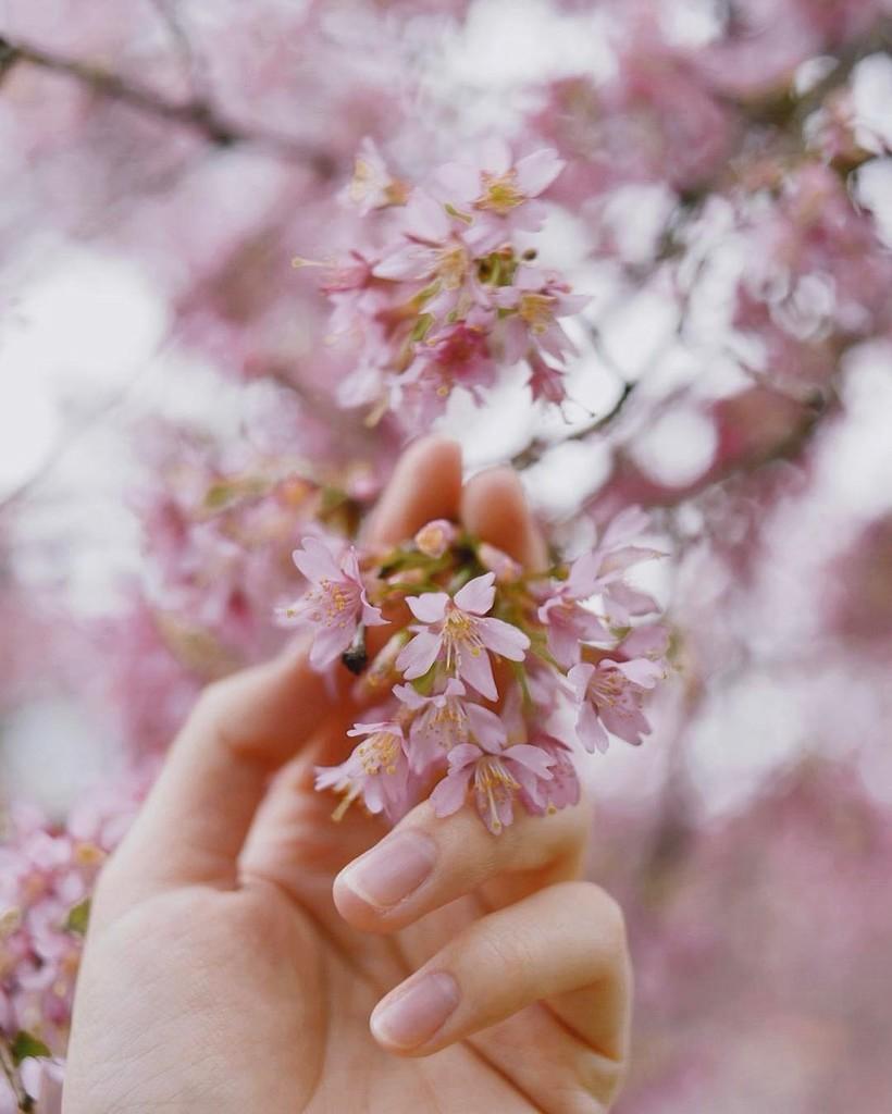 Фото цветы гифка