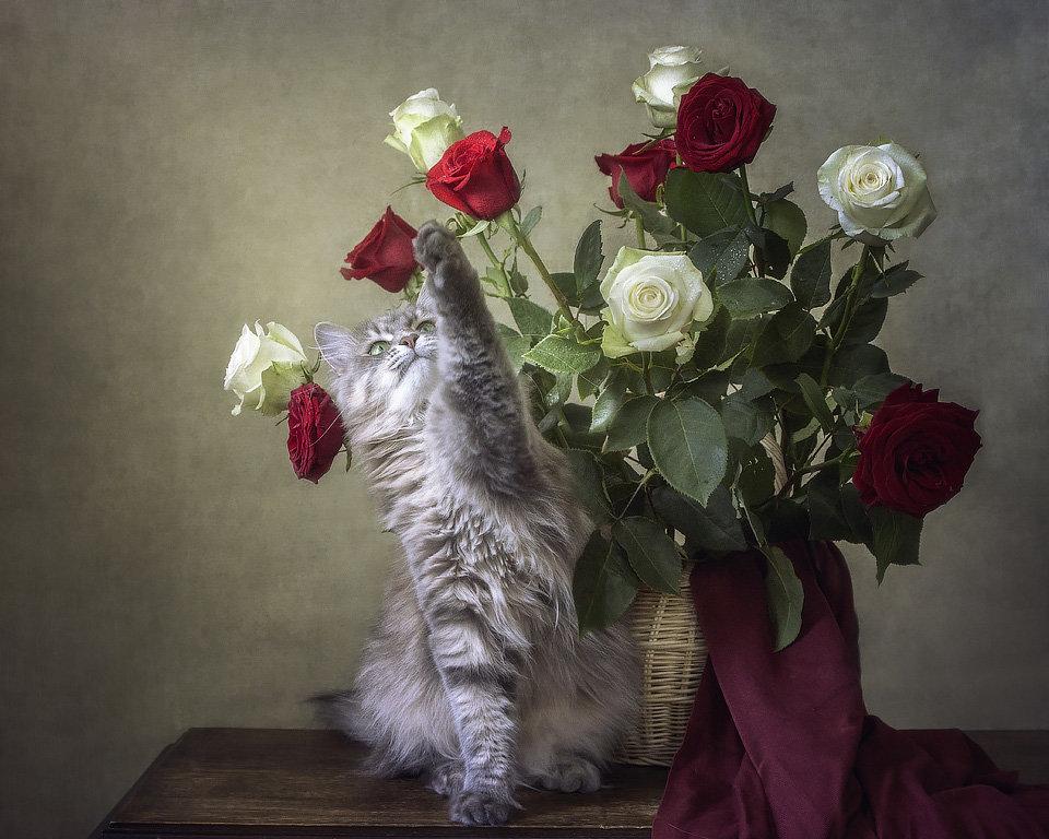 Картинки котенка с букетом цветов